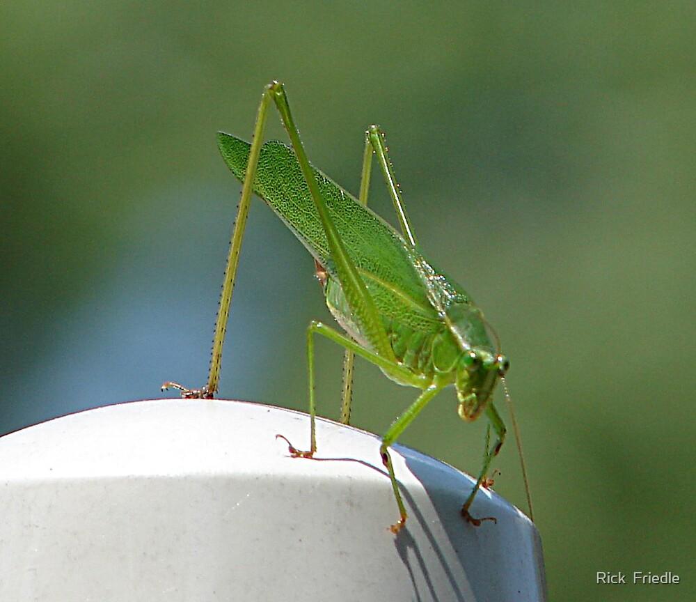 Hopper by Rick  Friedle