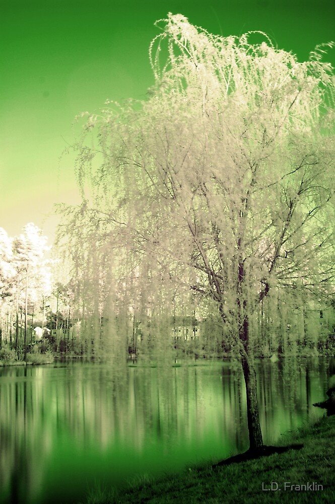 Infrared Tree And Pond by L.D. Franklin