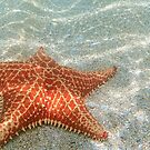 The Star Starfish by Tracy Riddell