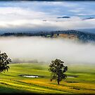 ~ Tasmanian Summer ~ by Leeo