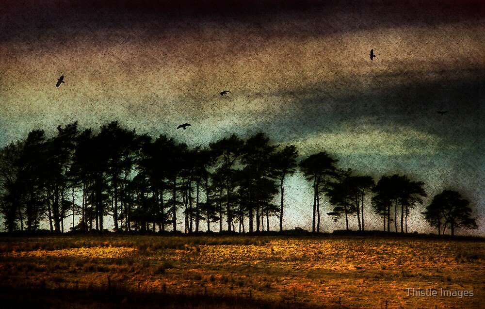 Under a Mugdock Sky by Thistle Images