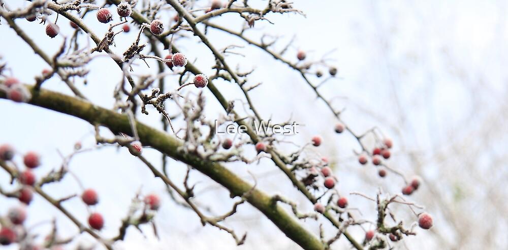 Winter Berries by Lee West