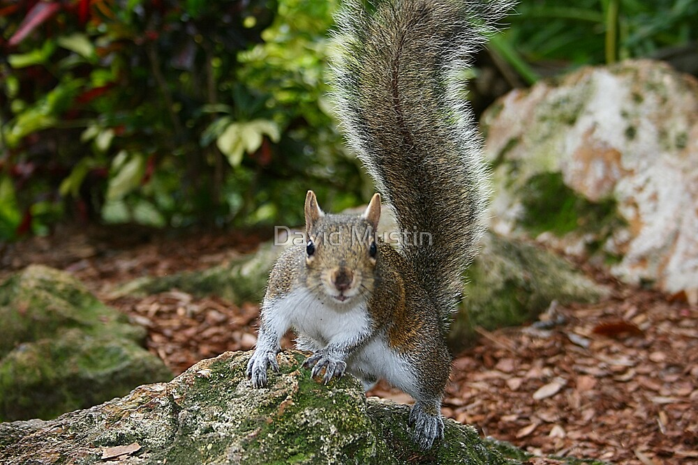 Squirrel posing down low by David Mustin
