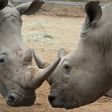 Rhino Horn by Horn by martina