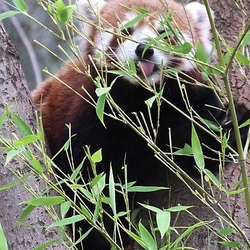 Red Panda by martina
