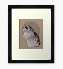 Sugar is a very floofly cat Framed Print