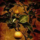 Bonsai Pear by Lydia Marano