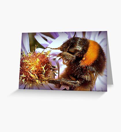 Somethings Bee-n Here Bee-fore Me! Greeting Card