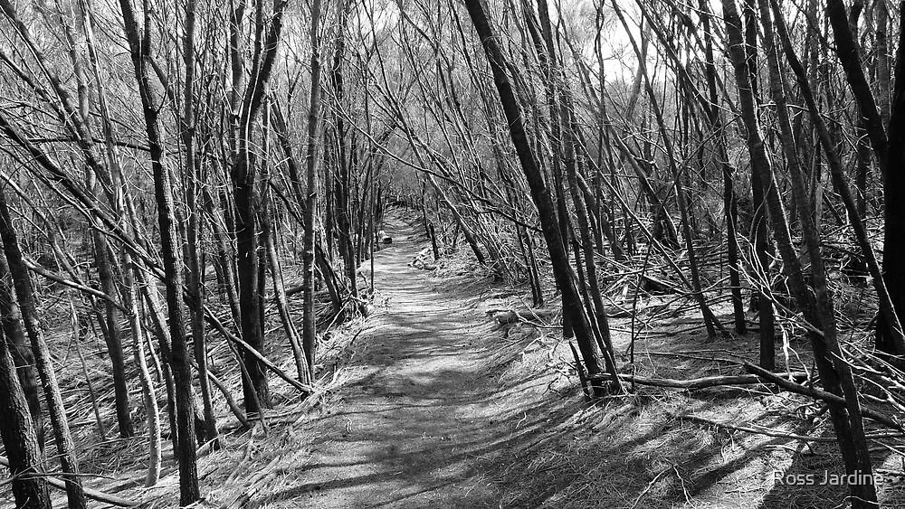An Eerie Walk  by Ross Jardine