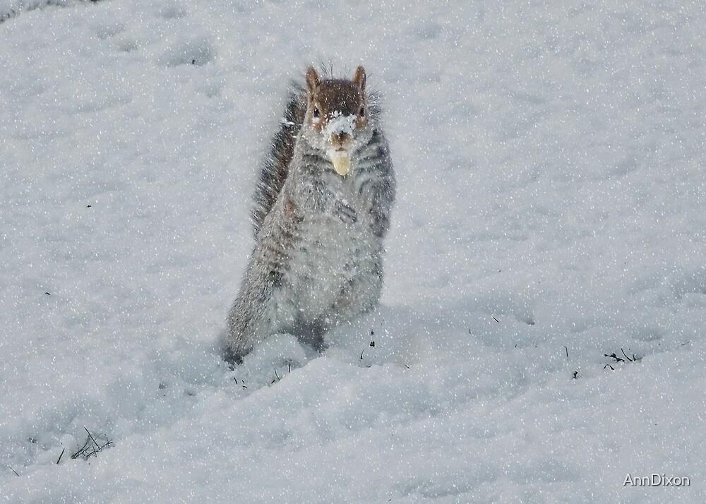A Snow Squirrell by AnnDixon