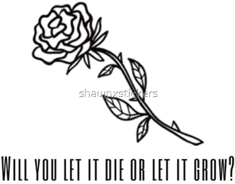Shawn mendes roses will you let it die or let it grow