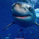 Sharks are Friends by seamonkey