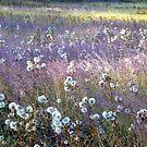 Dream Field by BrianAShaw