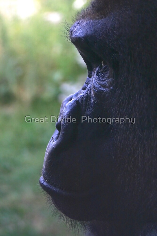 Gorilla Profile by Great Divide  Photography