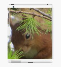 Red Squirrel Scotland iPad Case/Skin