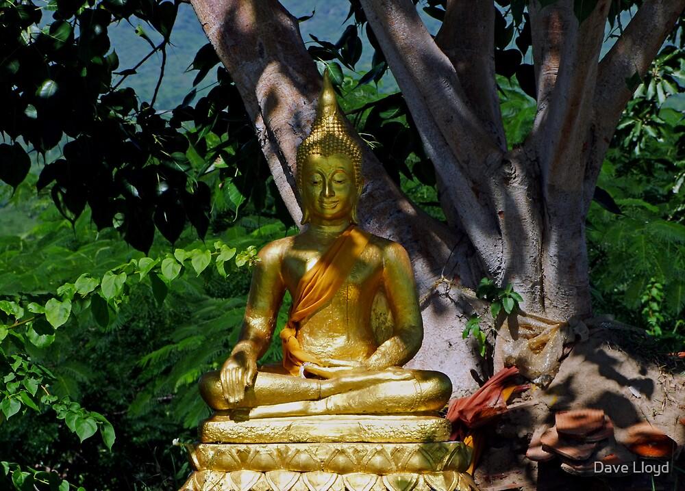 Leafy Buddha by Dave Lloyd
