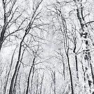 An Amersham Winter Wonderland by Natalie Broome