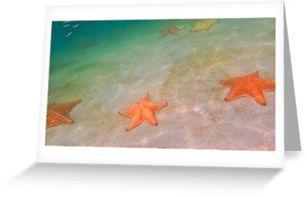 Starfish beach by Tracy Riddell