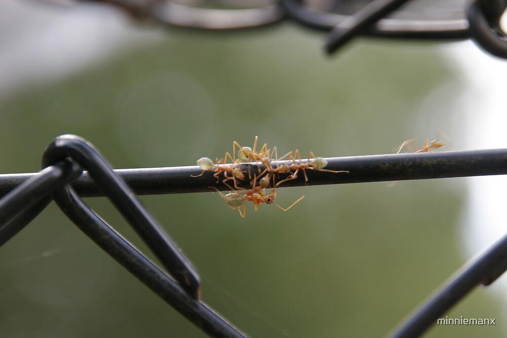 Green Ants by minniemanx