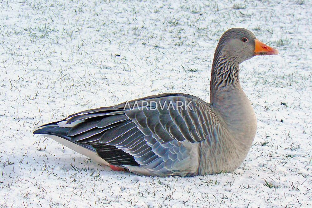 Snow Goose by AARDVARK