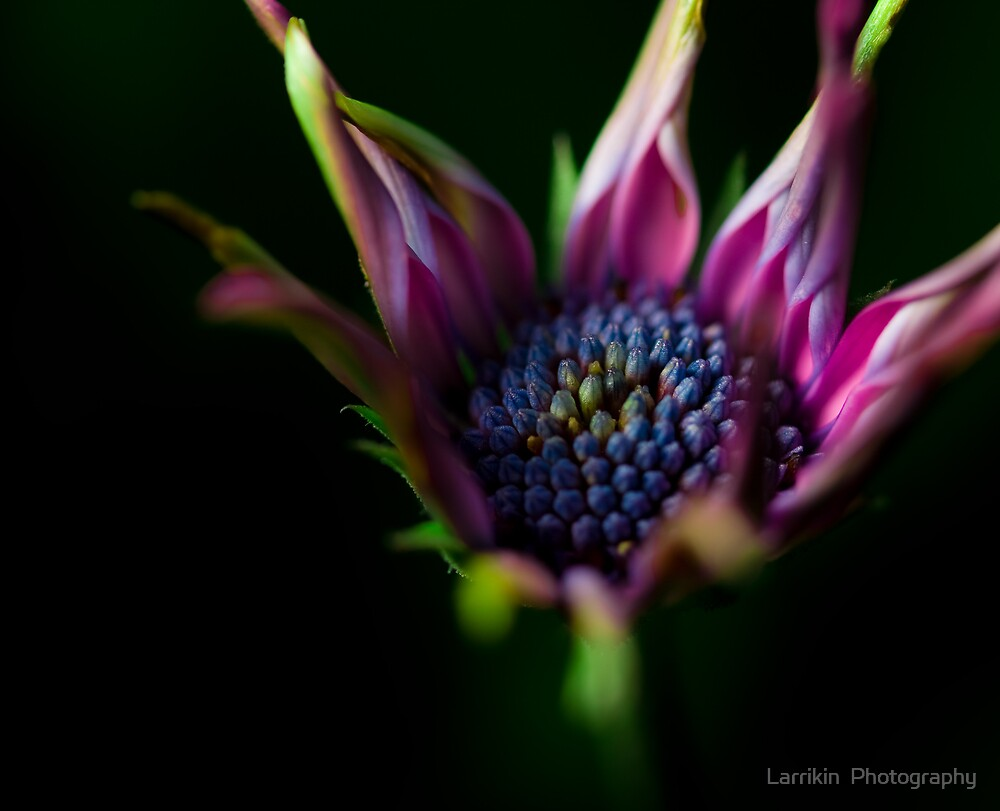 Aging gracefully   by Larrikin  Photography