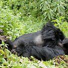 Mountain Gorilla Fun by ApeArt