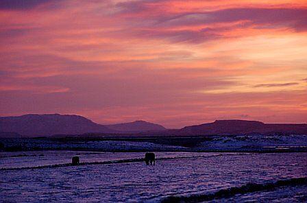 Sunset with horses by Jocelita