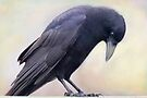 I Love Crows by Betsy  Seeton