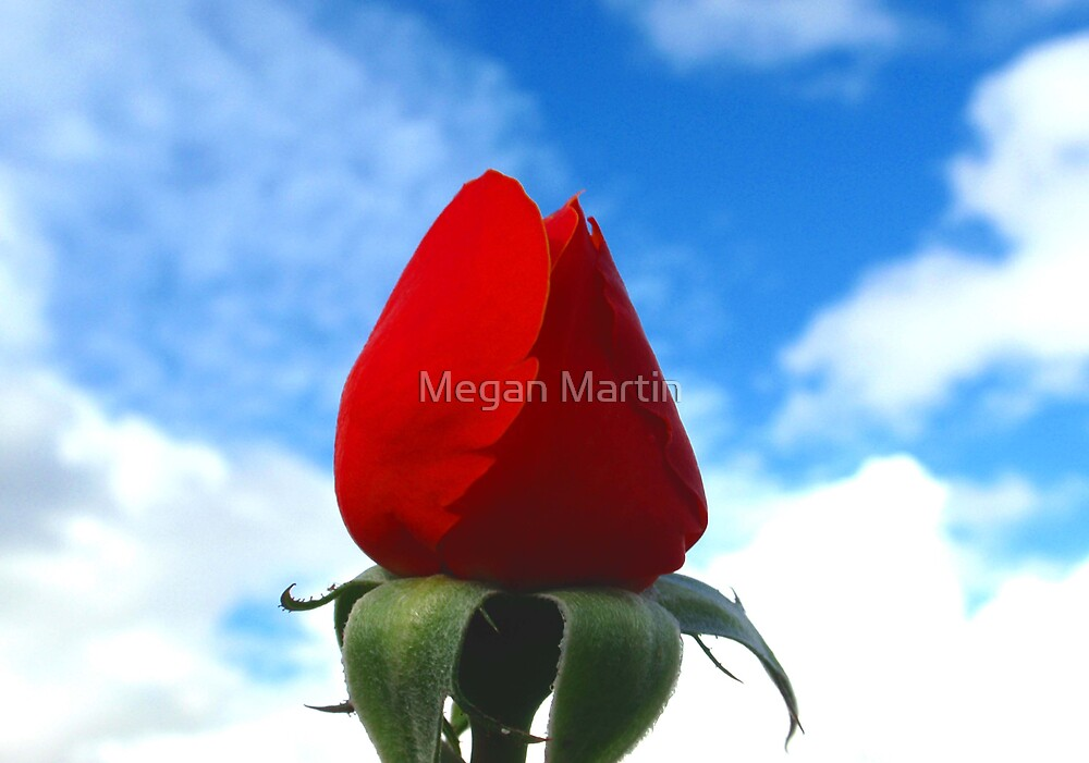 Roses Are Red by Megan Martin