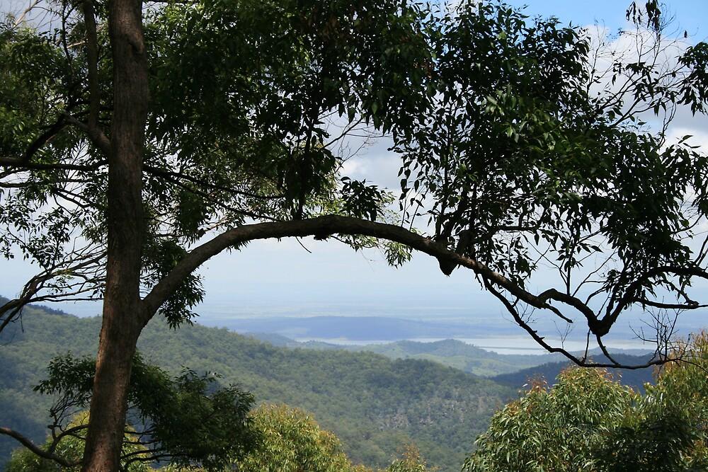 Australian Outback by Jay Spadaro