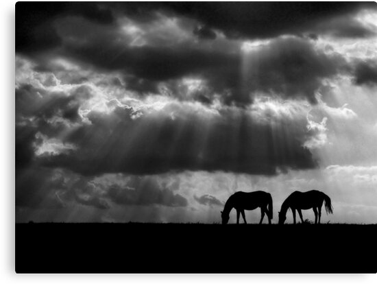 Evening Rays by Marylee Pope