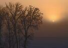Cold Still Beauty by Dawne Olson