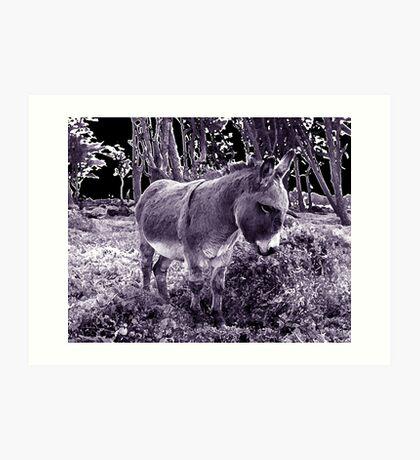 little donkey ... little donkey ... there's a star ahead! Art Print