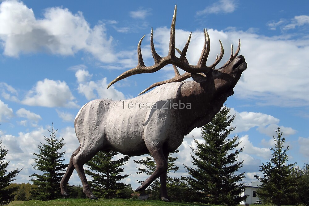 Onanole Elk by Teresa Zieba