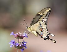 Butterfly Study  by rrushton