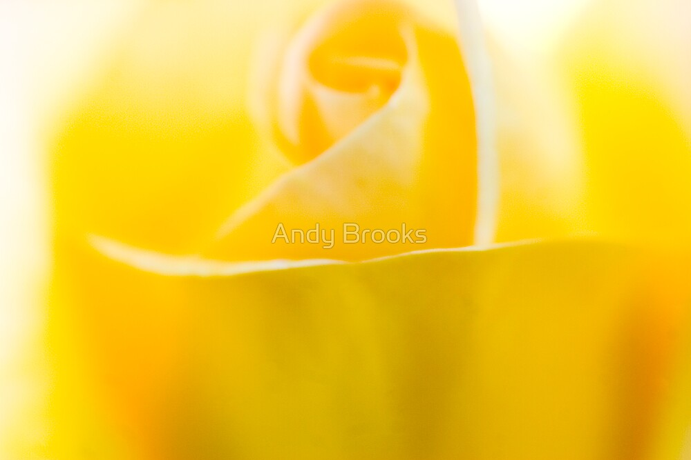 Yellow Floewr Closeup by Andy Brooks