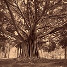 Roots by Bruce Moon