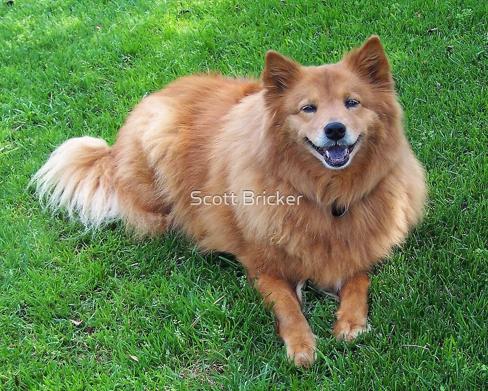 'Happy Dog Smile' by Scott Bricker