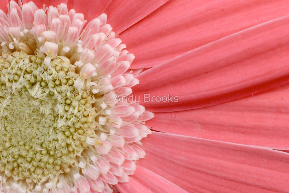 Pinky Closeup by Andy Brooks