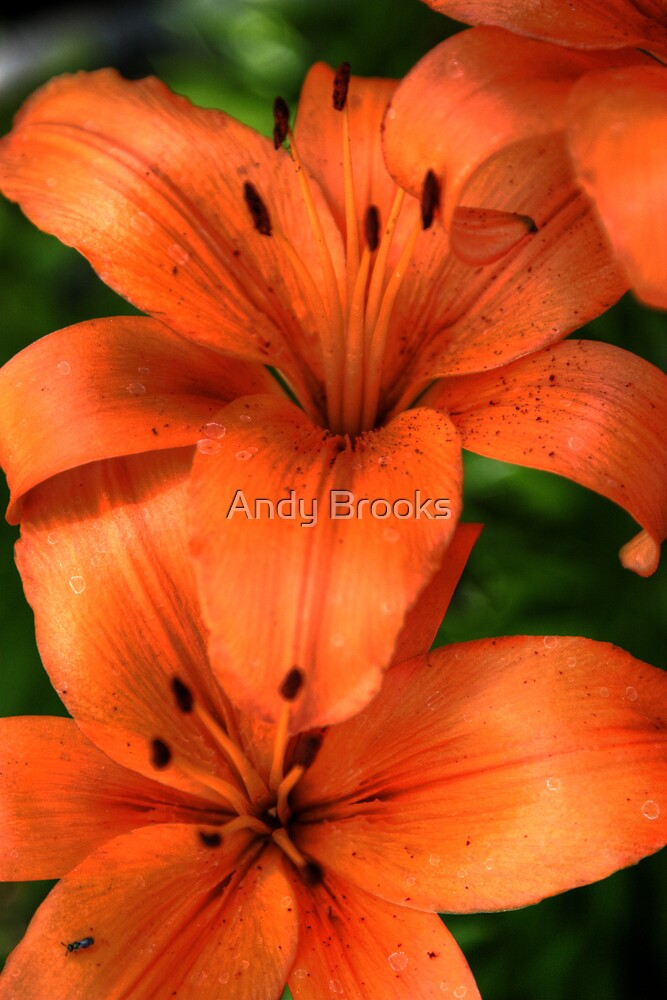 The Brilliance of a Lily by Andy Brooks
