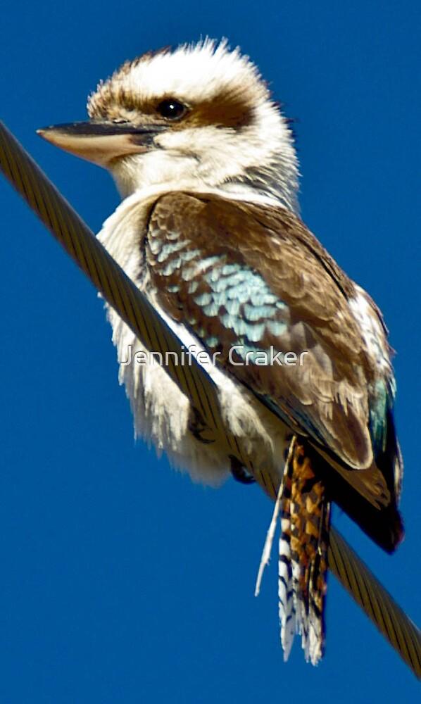 Kookaburra by Jennifer Craker