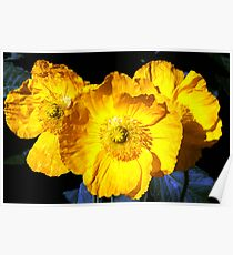 Poppies at Fort Bragg Poster