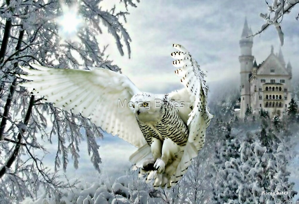 Snowy Owl by Morag Bates