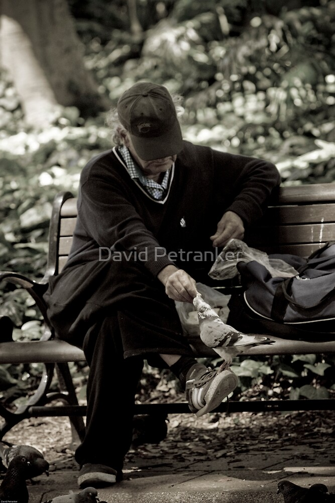 Feeding the birds  by David Petranker