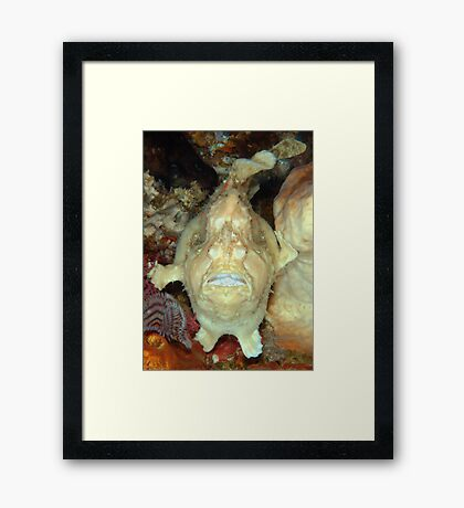 Giant Frogfish Framed Print