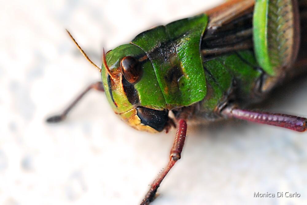 locust by Monica Di Carlo