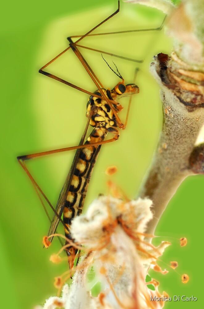 strange insect by Monica Di Carlo