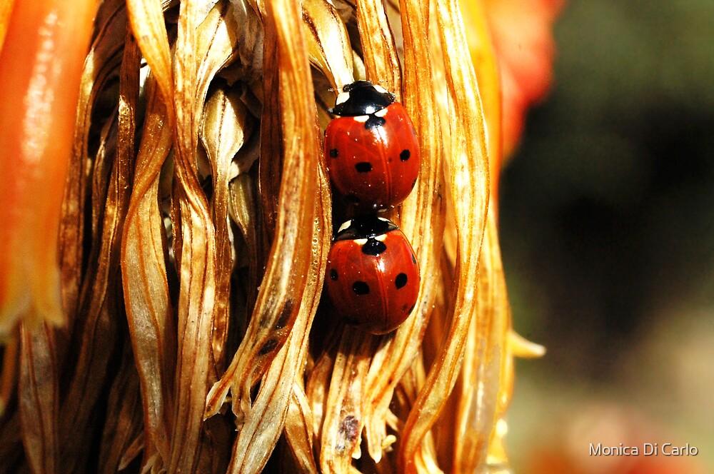 ladybugs by Monica Di Carlo
