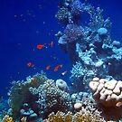 Wonderful Red Sea 5 by hurmerinta