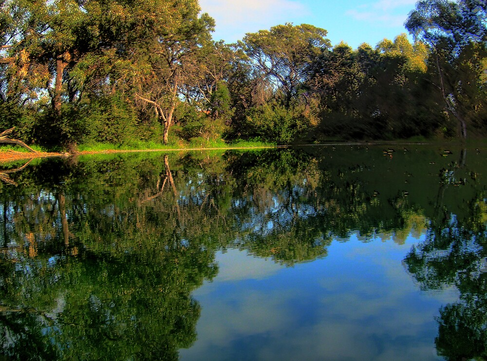The Pond on a Winters day #2 by Daniel Rayfield